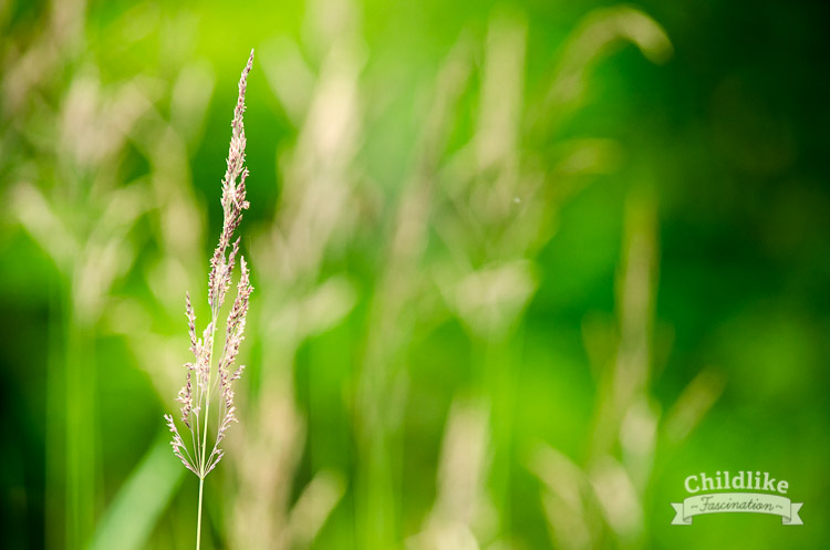 Wild grasses on the river bank