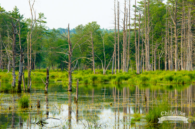Beautiful swamp forest